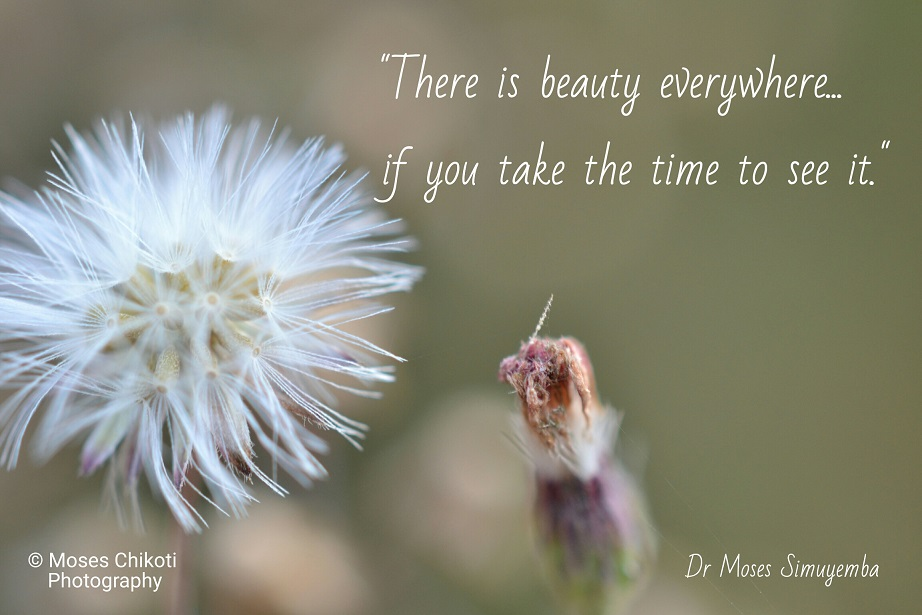 free inspirational quotes - there is beauty everywhere. Dr Moses Simuyemba