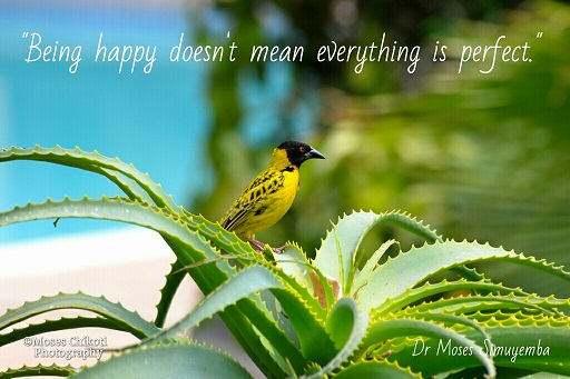Inspirational quotes - Being happy Weaver at Protea Hotel Safari Lodge, Lusaka, Zambia.Dr Moses Simuyemba