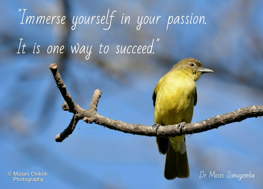 success quotes, quotes on success,Dr Moses Simuyemba, Motivation For Dreamers
