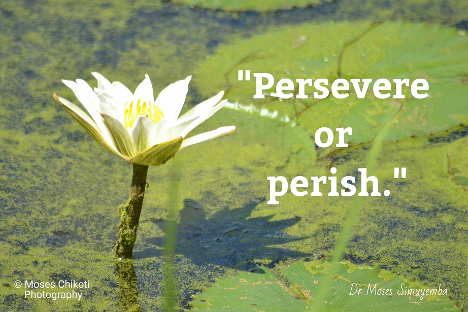 persistence quotes. mtoivation for dreamers. quotes on persistence