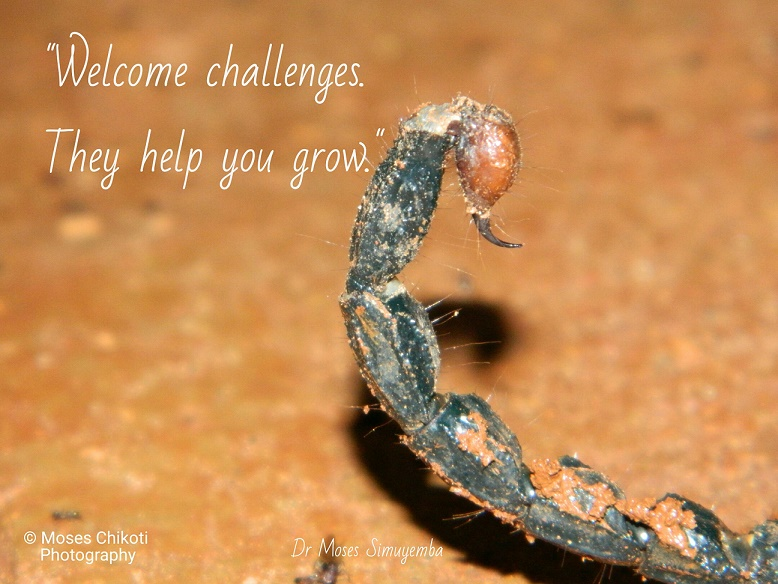 inspirational quotations - welcome challenges, they help you grow. Dr Moses Simuyemba